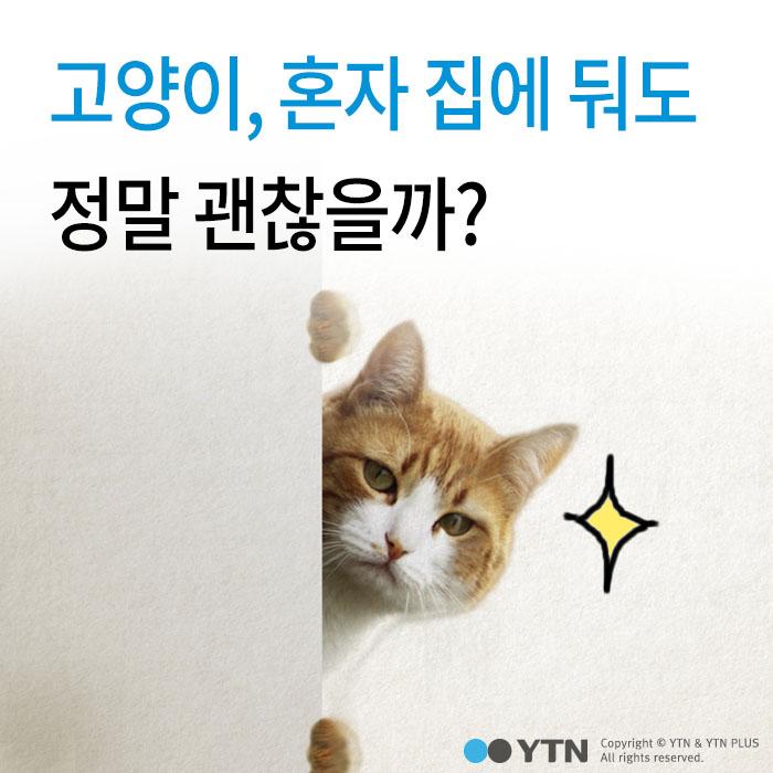[한컷뉴스] 고양이, 정말 집에 혼자 둬도 괜찮을까?