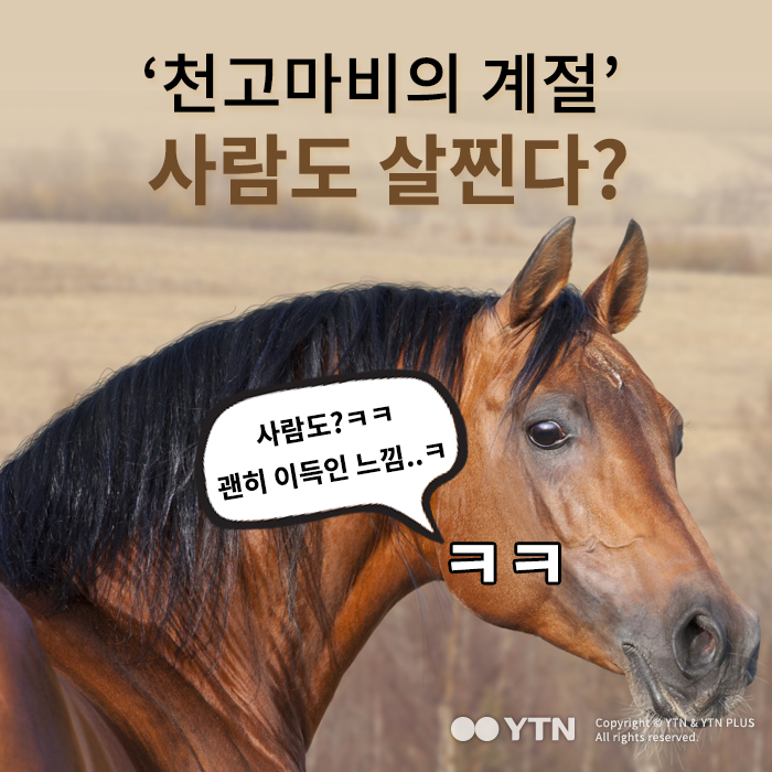 [한컷뉴스] '천고마비의 계절' 사람도 살찐다?