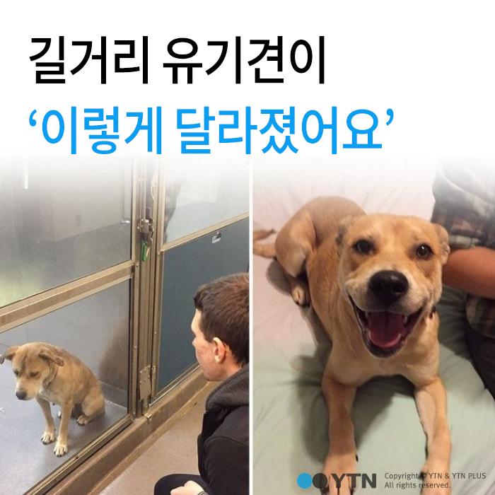 [한컷뉴스] 길거리 유기견이 '이렇게 달라졌어요'