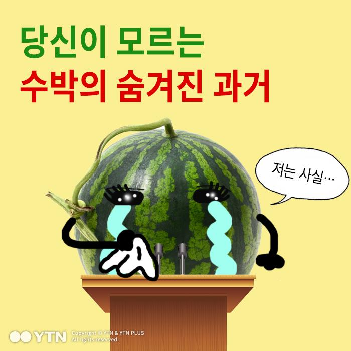 [한컷뉴스] 당신이 몰랐던 수박의 숨겨진 과거
