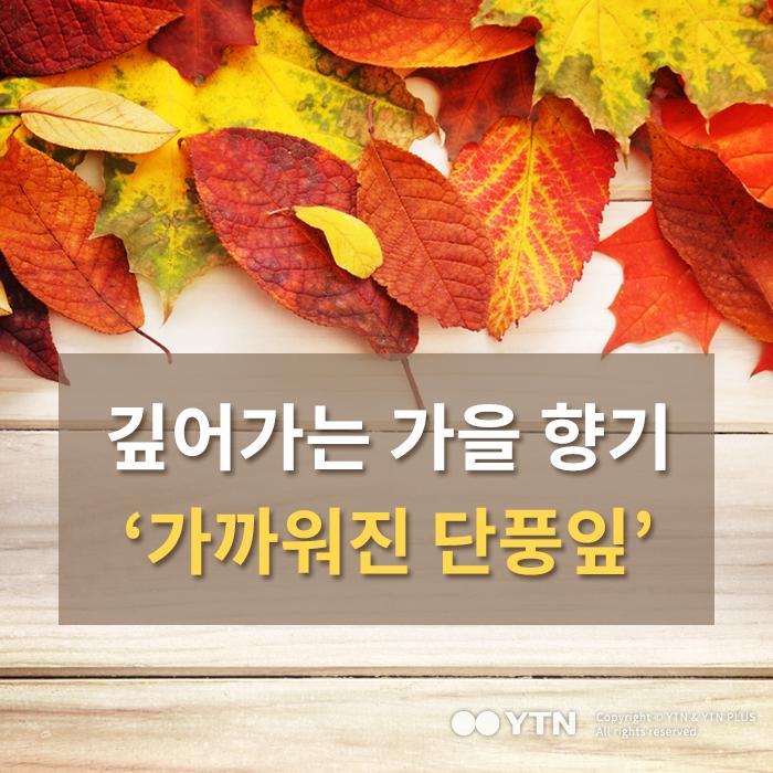 [한컷뉴스] 깊어가는 가을 향기…가까워진 단풍잎