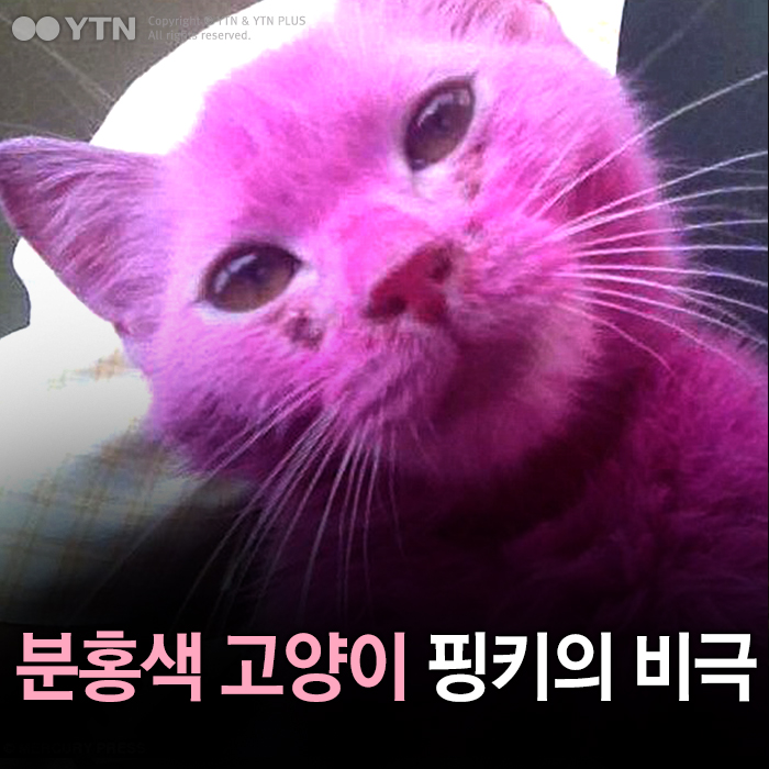 [한컷뉴스] 분홍색 고양이 '핑키'의 비극