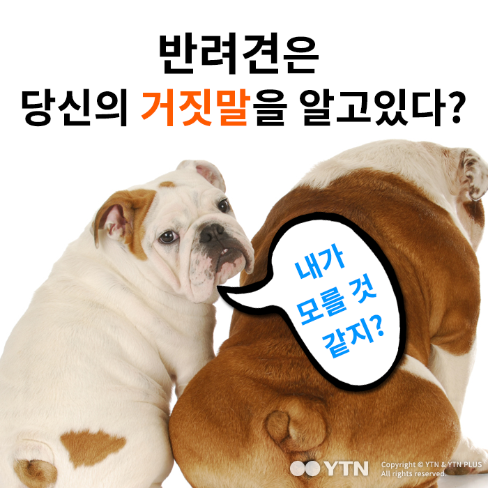 [한컷뉴스] 반려견은 당신의 거짓말을 알고있다?