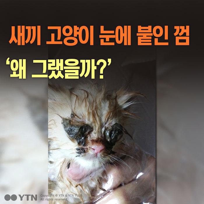 [한컷뉴스] 새끼 고양이 눈에 붙인 껌 '왜 그랬을까?'