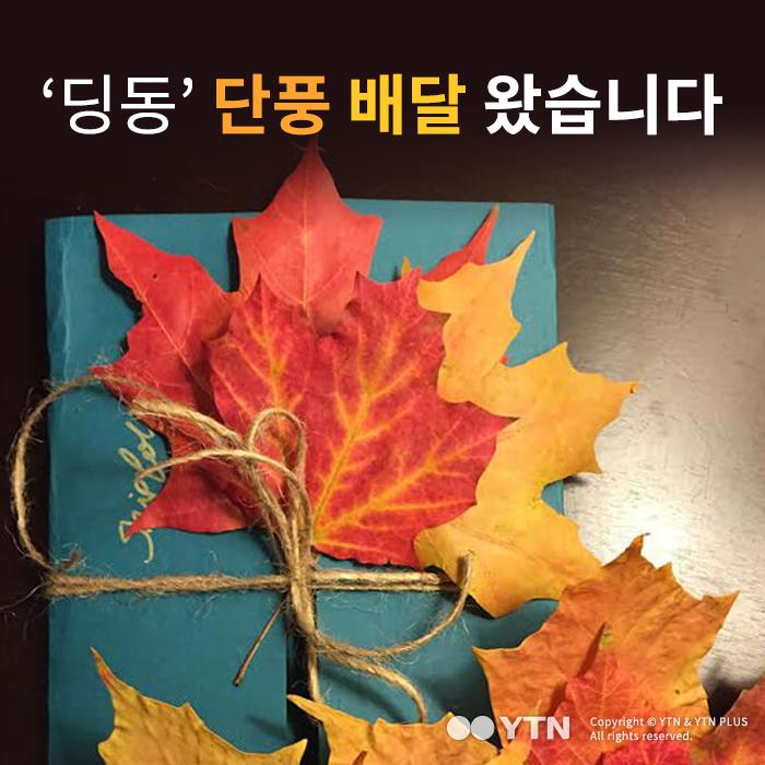 [한컷뉴스] '딩동' 단풍 배달 왔습니다
