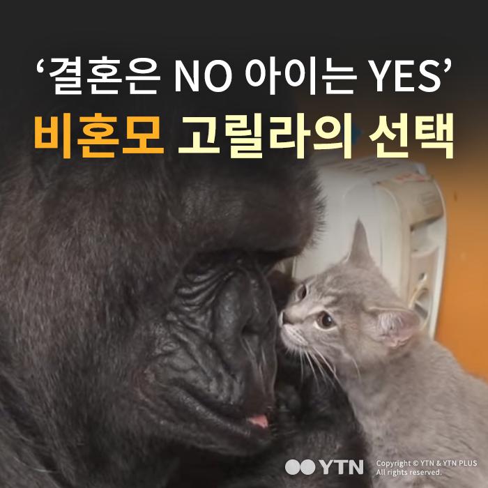 [한컷뉴스] '결혼은 NO 아이는 YES' 비혼모 고릴라의 선택