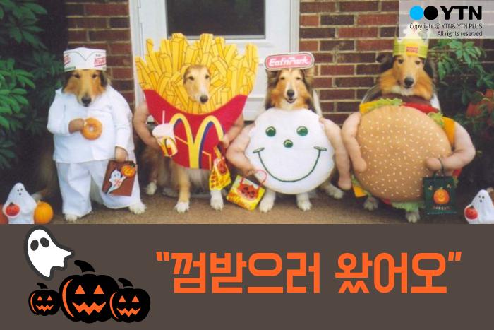 [한컷뉴스] 할로윈 앞둔 강아지들 '나 어때요?'