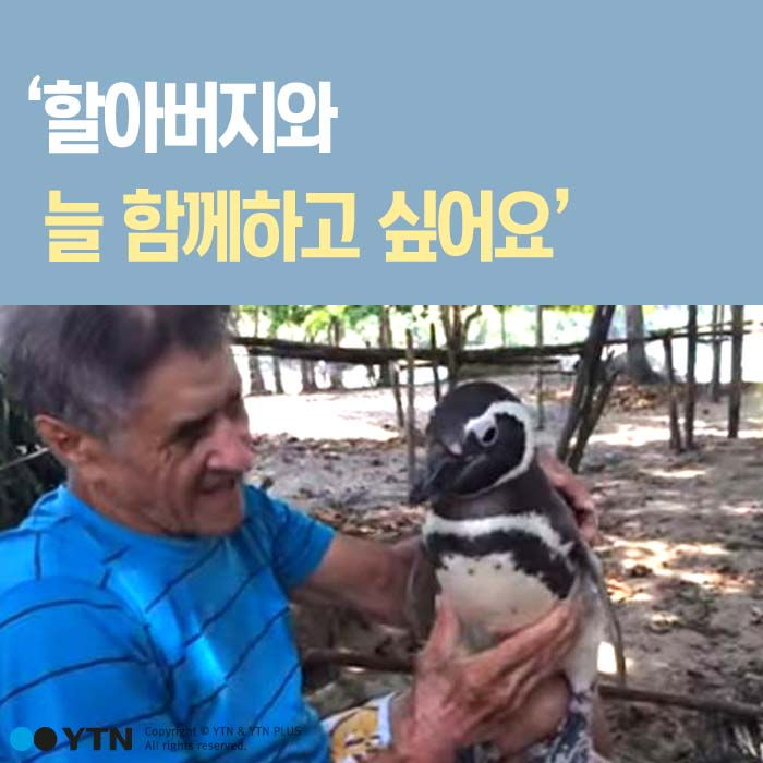 [한컷뉴스] '효심 깊은 펭귄' 전래동화 같은 실화