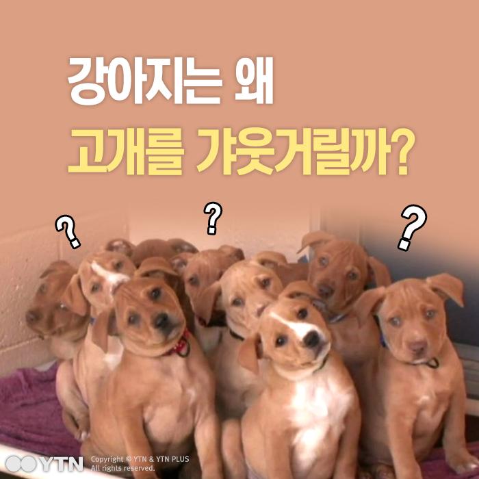[한컷뉴스] 강아지는 왜 고개를 갸웃거릴까?