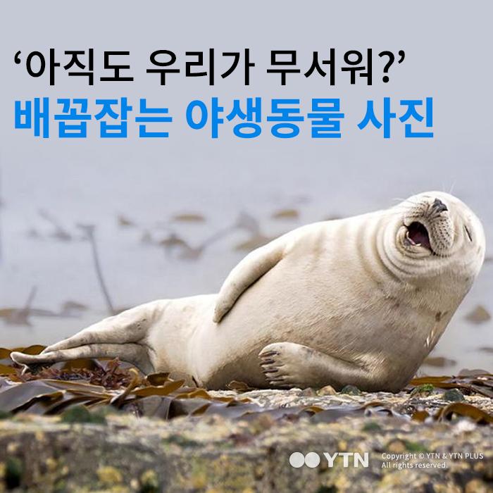 [한컷뉴스] '아직도 우리가 무서워?' 배꼽잡는 야생동물 사진
