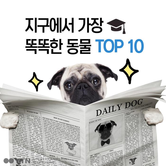 [한컷뉴스] 지구에서 가장 똑똑한 동물 TOP 10