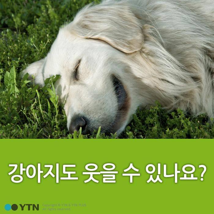 [한컷뉴스] 강아지도 웃을 수 있나요?