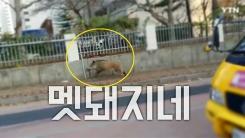 [영상] 아파트 단지를 질주하는 멧돼지…일대는 혼비백산