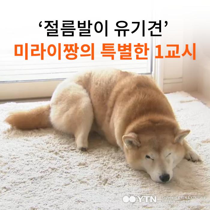 [한컷뉴스] '절름발이 유기견' 미라이짱의 특별한 1교시