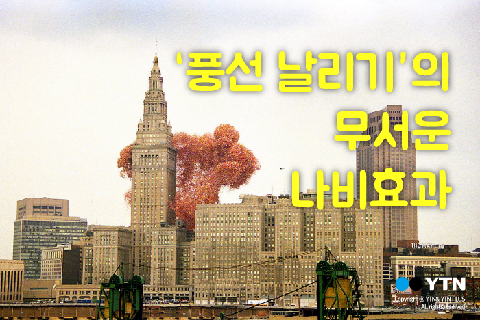[한컷뉴스] 풍선 날리기 행사의 무서운 나비효과