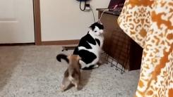 """""""네 어미 아닌데…"""" 고양이 쫓아다니는 강아지"""