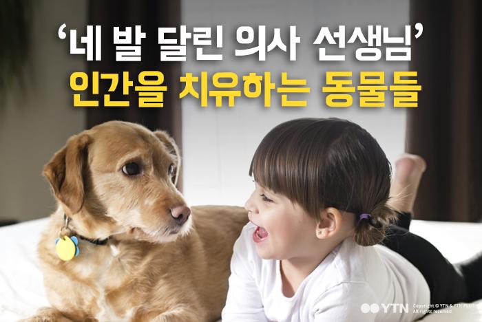 [한컷뉴스] '네 발 달린 의사 선생님' 인간을 치유하는 동물들