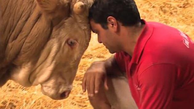 평생 묶여있던 소가 풀려난 순간 '기쁨의 춤' (영상)