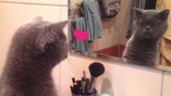 '오늘 유난히 멋있는걸' 왕자병 걸린 고양이 (영상)