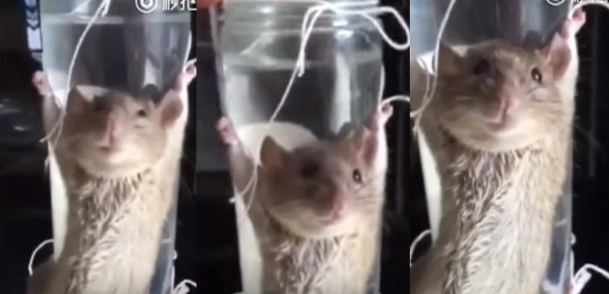 """""""내 바나나 왜 먹었어?"""" 생쥐 고문 영상 논란"""