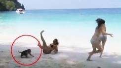 '팬티 벗기지 마!' 원숭이들의 주체 못 할 장난본능