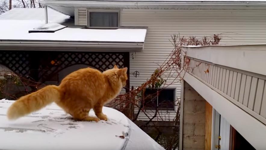 '뛰는 순간 후회' 점프력 과신한 고양이