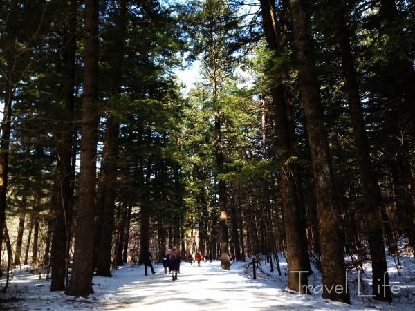 월정사 전나무 길이 겨울에 제격인 이유