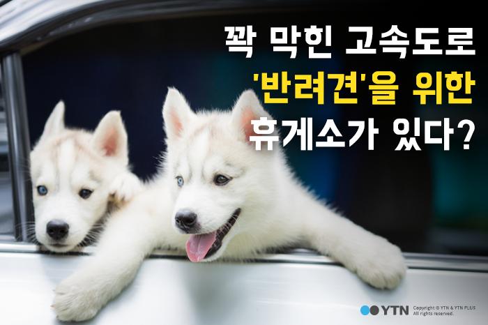 [한컷뉴스] 꽉 막힌 고속도로 '반려견'을 위한 휴게소가 있다?
