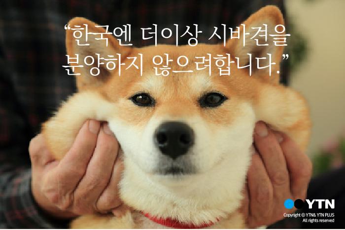 """[한컷뉴스] """"시바견을 한국으로는 분양하지 않겠습니다"""""""