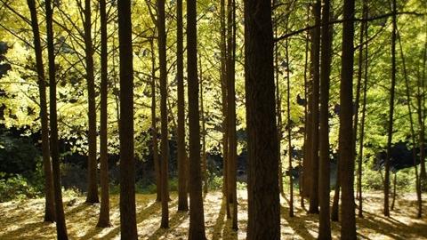 숲 [포토에세이-천마산]