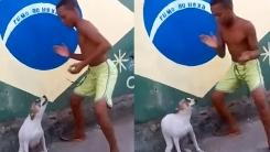 '들썩들썩' 삼바의 기운이 느껴지는 브라질 강아지