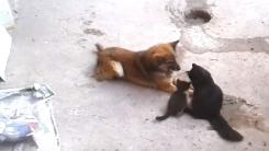 """개와 고양이의 우정 """"친정 나들이 왔다옹"""""""