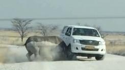 성난 아프리카 코뿔소의 공격…관광객 차로 돌진