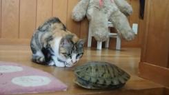 """""""똑똑 거북아, 놀자"""" 고양이의 등딱지 노크"""
