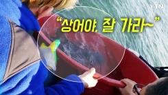 [영상] '횟집서 40마리 출산' 참상어 가족 바다로 귀환