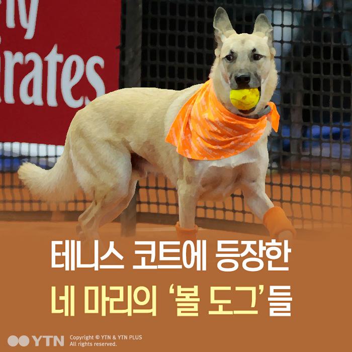 [한컷뉴스] 테니스코트 스타가 된 길거리 유기견들