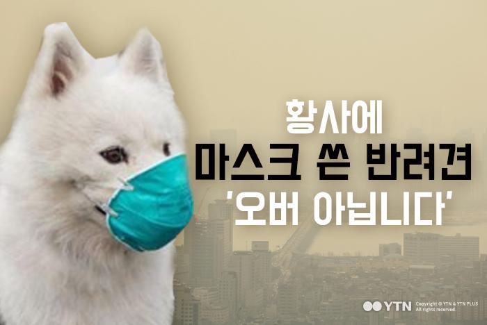 [한컷뉴스] 황사에 마스크 쓴 반려견 '오버 아닙니다'