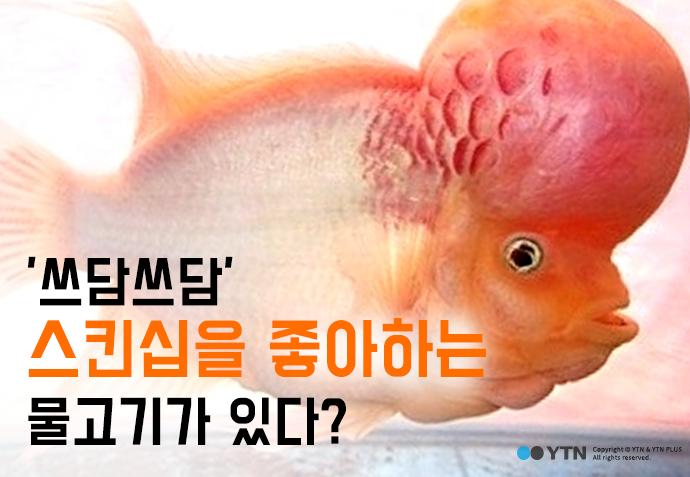 [한컷뉴스]  '쓰담쓰담' 스킨십을 좋아하는 물고기가 있다?