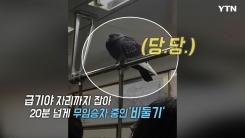 """[영상] """"강남까지만 갑시다"""" 지하철 무임승차 비둘기"""