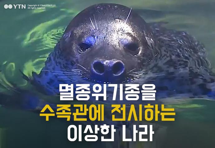 [한컷뉴스] 멸종위기종을 수족관에 전시하는 이상한 나라