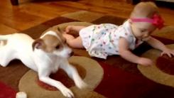 '잘 봐' 아기에게 기는 방법 알려주는 강아지 선생님
