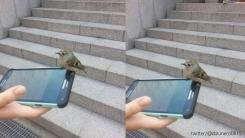 '넌 어디서 왔니?' 핸드폰에서 떨어지지 않는 새
