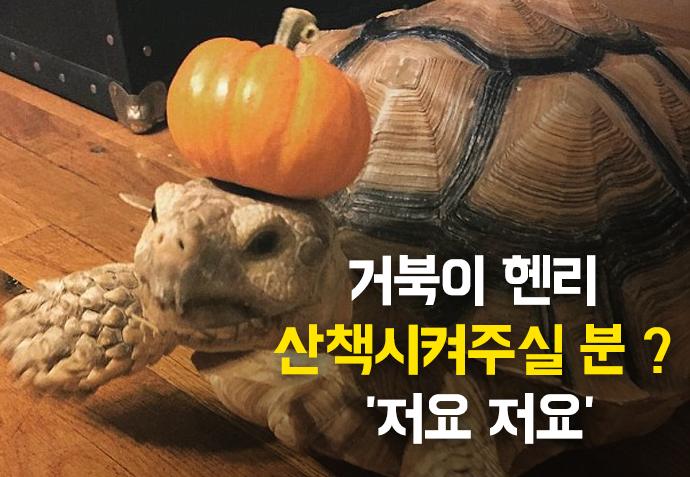 [한컷뉴스] 거북이 헨리 산책시켜주실 분 ? '저요 저요'
