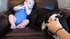 아기의 똥냄새를 맡은 강아지의 단호한 행동