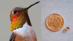 '살아있는 새 맞아?' 동전만 한 새를 길들이는 법