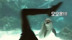 사람이 하는 서커스 본 돌고래 반응(귀염주의)