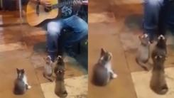 버스킹에 심취한 아기 고양이 4형제 '앵콜 앵콜'