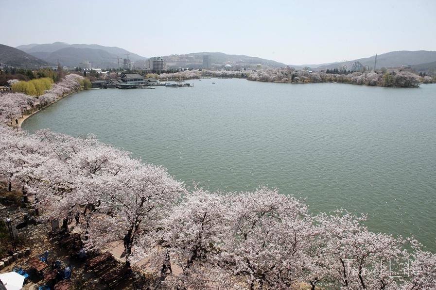 [경주 백과사전] 봄의 절정을 지나는 경주의 꽃