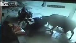 """'""""죽이지 마""""...명예 살인 당하는 인도 소녀 보호하는 소"""