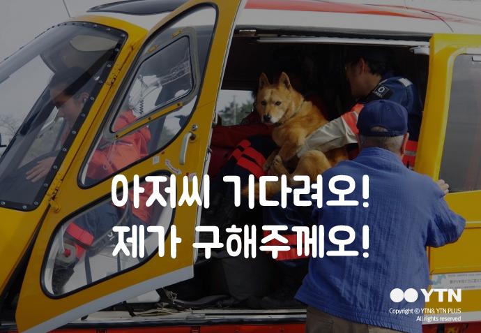 [한컷뉴스] 가스실에서 구출된 강아지의 새로운 삶